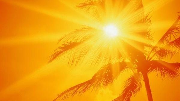 光飽和点を超える太陽光を利用して