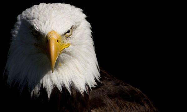 タカ派...鷹が猛禽類であることから、その持つ雰囲気や習性などを政治的傾向の分類にもちいたもの 専門知識 : 論戦, 戦争心理戦, 戦争計画を策定....いいね !