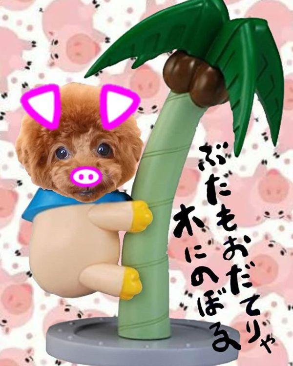 豚も褒めれば木に登る....ワハハハ !